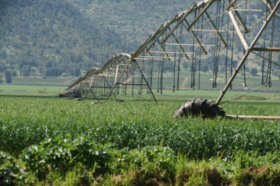 משרד האוצר, החקלאות והתאחדות חקלאי ישראל חתמו על הסכם מים: כ- 520 מיליון ₪ יועברו לחקלאים