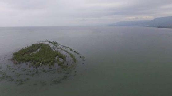 האי מול קיבוץ מעגן. צילום: שי מזרחי, רשות הכנרת